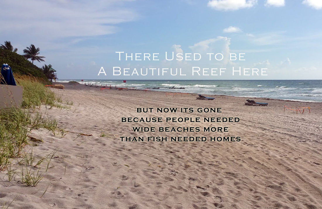 there used to be a reef here at Red Reef Park