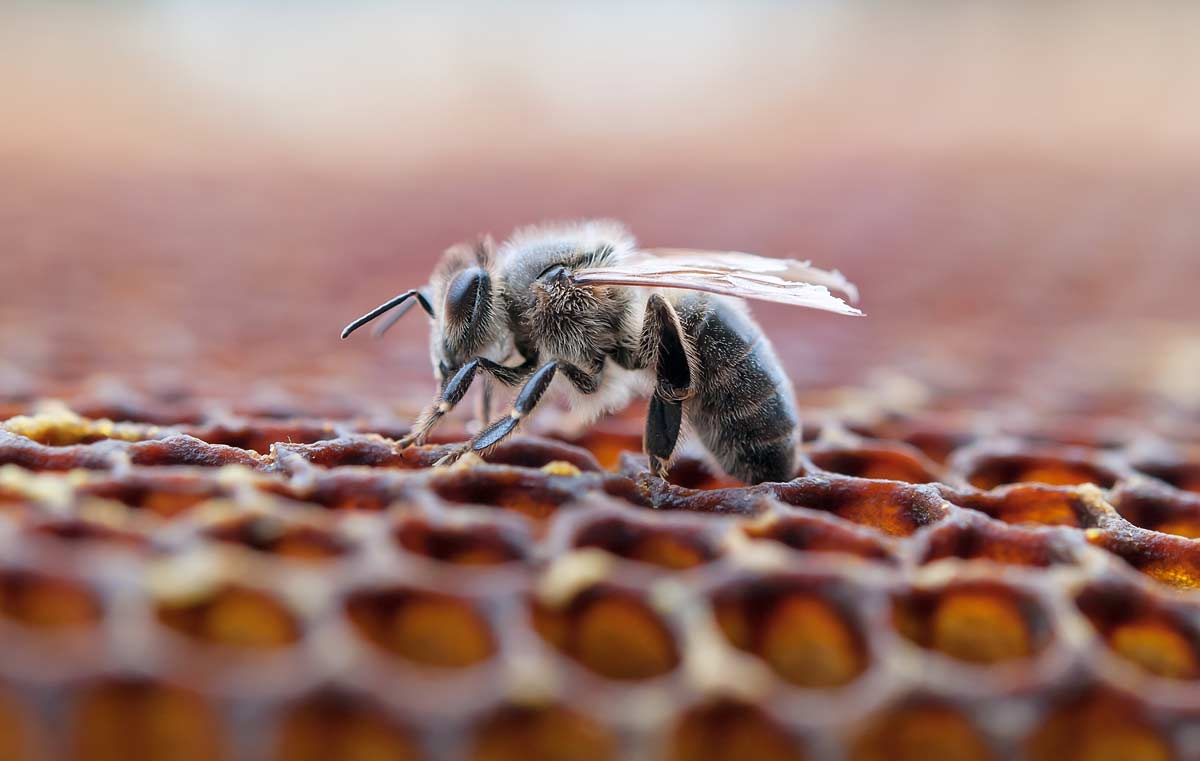 Naled insecticide is killing bees in Boca Raton